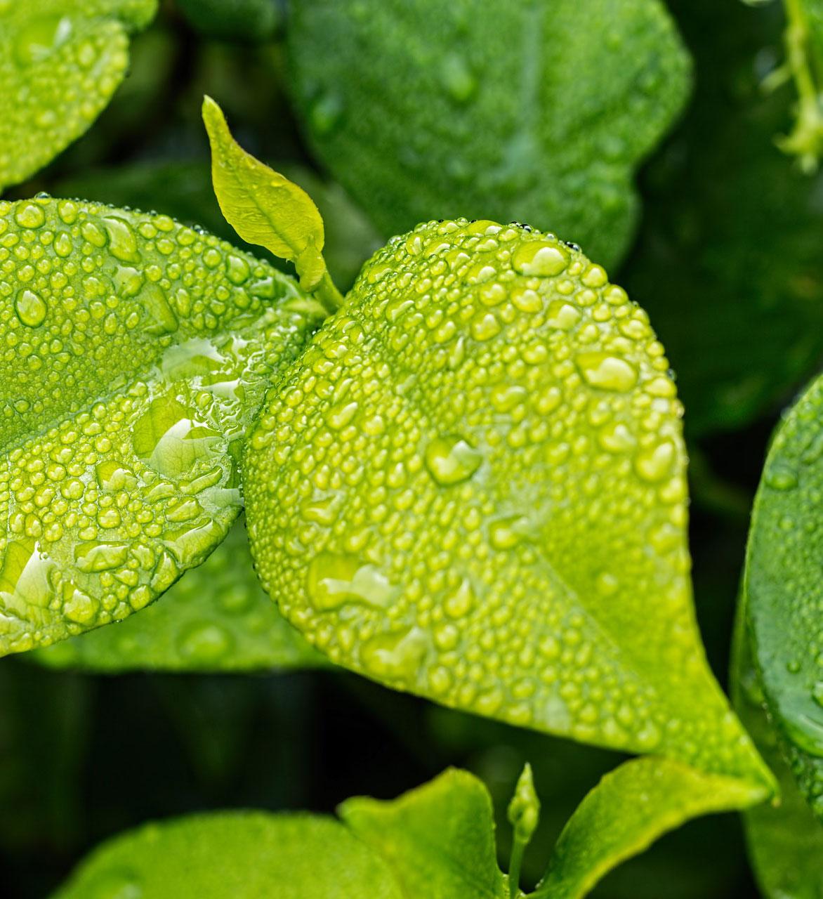 Biokol - Köp EBC-certifierad och klimatsmart biokol